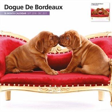 Magnetsteel Kalender 2017 Bordeaux Dog Modern 30x30cm