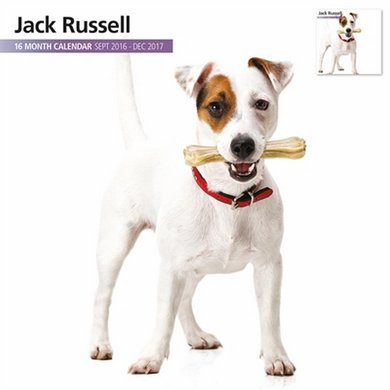 Magnetsteel Kalender 2017 Jack Russel Modern 30x30cm