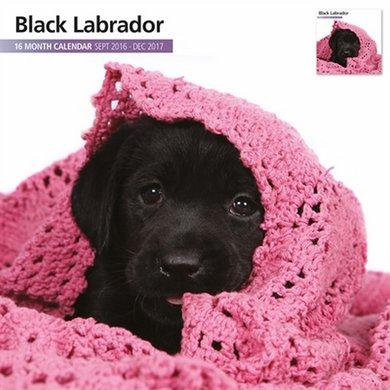 Magnet&steel Kalender 2017 Labrador Zwart Modern 30x30cm