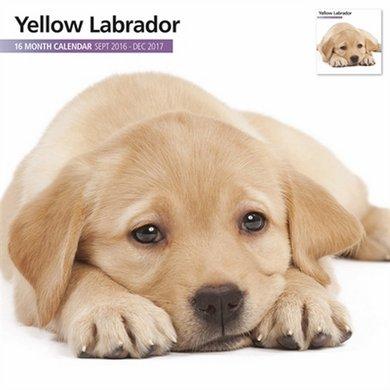 Magnetsteel Kalender 2017 Labrador Blond Modern 30x30cm