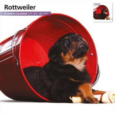 Magnetsteel Kalender 2017 Rottweiler Modern 30x30cm