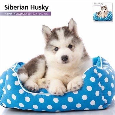 Magnetsteel Kalender 2017 Siberian Husky Modern 30x30cm