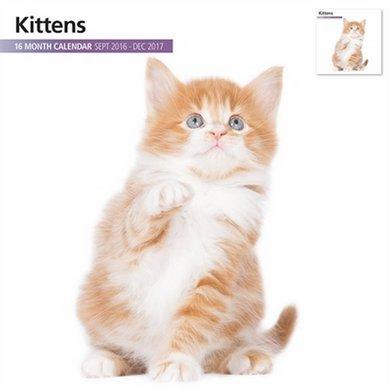 Magnet&steel Kalender 2017 Kittens Modern 30x30cm