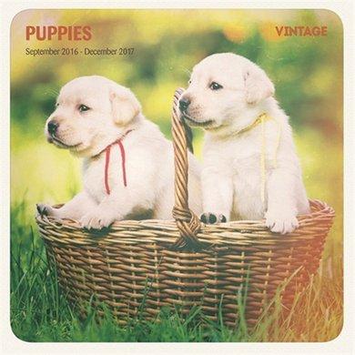 Magnet&steel Kalender 2017 Puppys Vintage 30x30cm
