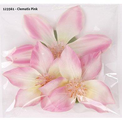 Clematis Pink 3 Pieces 10/13cm