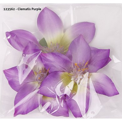 Clematis Purple 3 Pieces 10/13cm