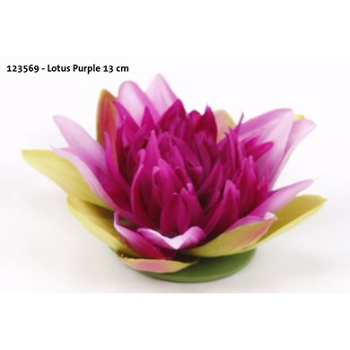 Lotus Purple 13cm